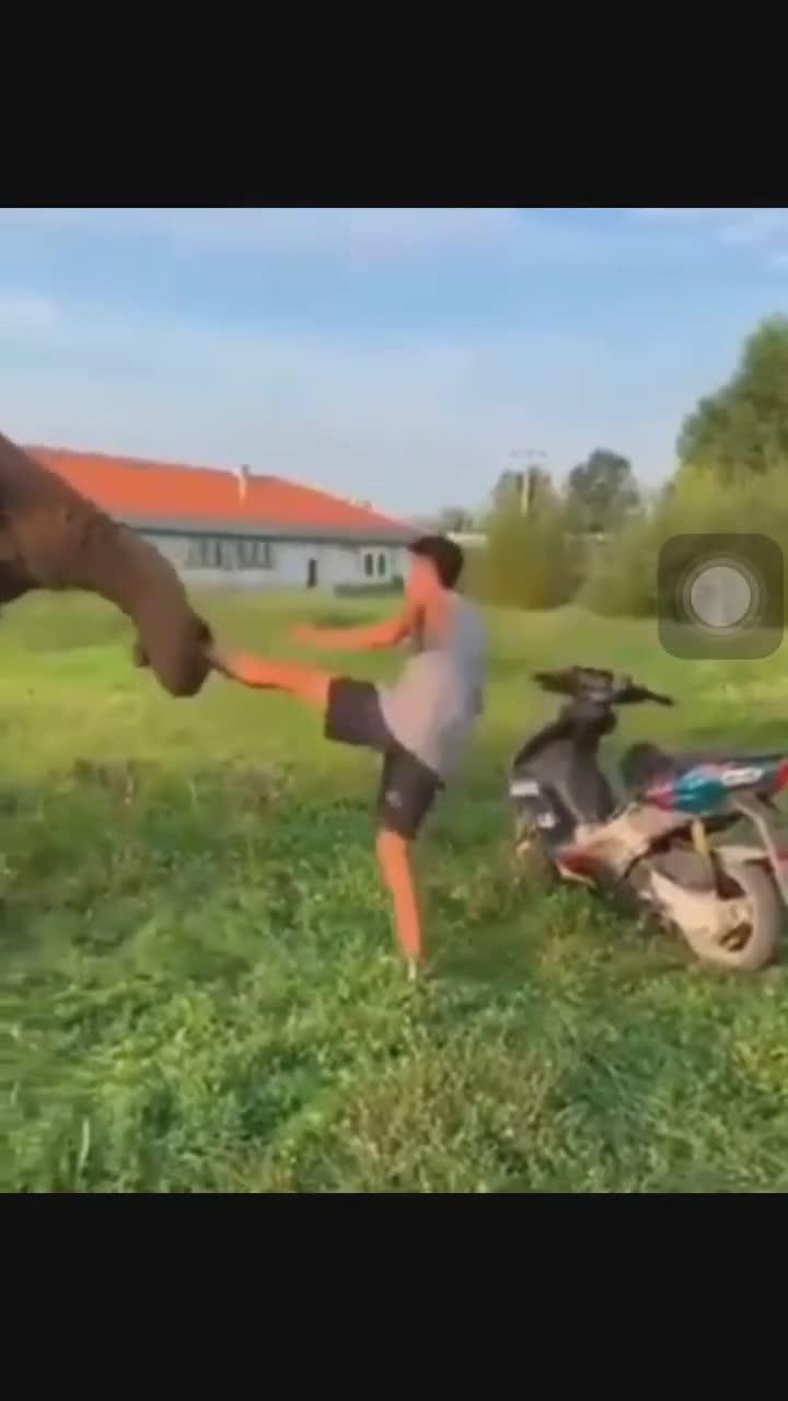 Chú voi ngăn cản người đàn ông đi xe máy không đội mũ bảo hiểm