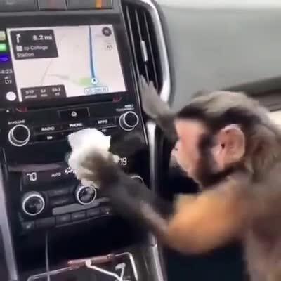 Chú khỉ làm sạch nội thất ô tô một cách điệu nghệ