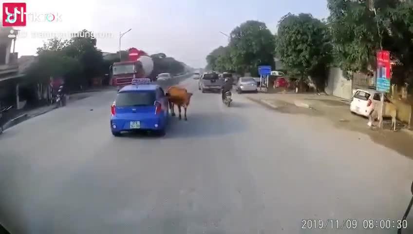 """Sự cố hy hữu: Taxi """"cà khịa""""... con bò và cái kết khiến 2 thanh niên hoảng hốt"""