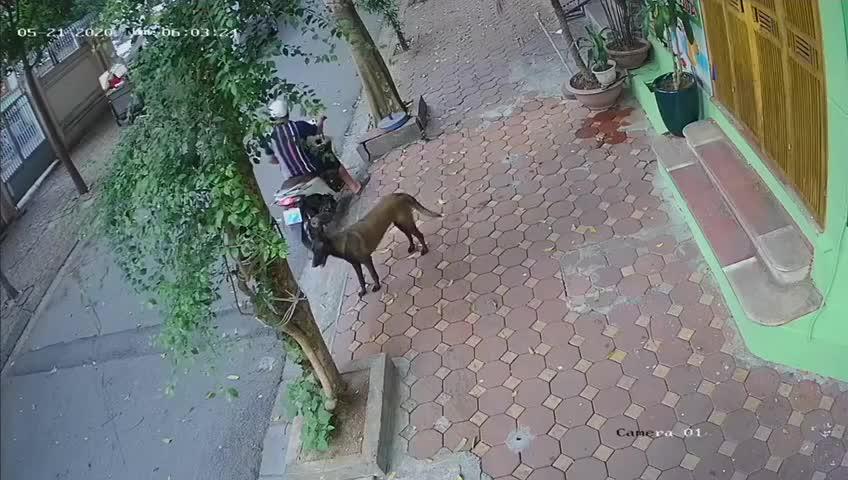 Màn trộm chó kì lạ