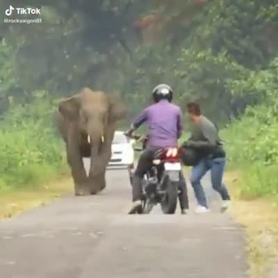 Bị chú voi rượt đuổi, hai thanh niên chạy bán sống bán chết, bỏ lại cả chiếc xe phân khối lớn