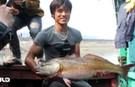 Ngư dân bắt được cá lạ, nghi là cá sủ vàng