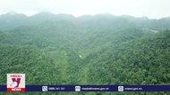 Thoát nghèo nhờ trồng rừng ở Bắc Kạn