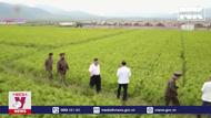 Triều Tiên thúc đẩy tự phục hồi kinh tế