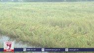 Hậu Giang: 1.000 ha lúa và cây ăn trái bị ảnh hưởng do mưa lớn