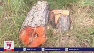 Lơ là quản lý các dự án giao rừng cho doanh nghiệp