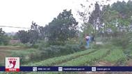 Bắc Ninh khoanh vùng dịch tả lợn châu Phi