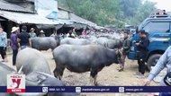 Khó kiểm soát dịch tại chợ trâu, bò lớn nhất Bắc Kạn