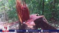 Phát hiện nơi chứa gỗ từ vụ phá rừng quy mô lớn