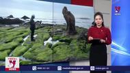 Vẻ đẹp đặc sắc của bãi rêu Cổ Thạch ở Bình Thuận