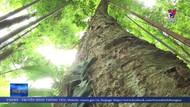 Lào Cai gặp khó khi nhận bàn giao quản lý rừng từ doanh nghiệp
