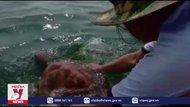 Ngư dân Nghệ An thả rùa quý hiếm về biển
