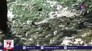 Tìm nguyên ngân cá sặc bổi bị chết tại Cà Mau