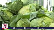 TP.HCM ủng hộ tiêu thụ nông sản Hải Dương