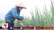 Phú Thọ khó tiêu thụ nông sản do dịch COVID-19