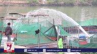 Cá chết trên sông Cầu do thiếu oxy