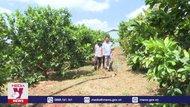 Thủ phủ Hồ tiêu Gia Lai chuyển hướng sang cây ăn quả