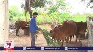 Ninh Bình phòng, chống bệnh viêm da nổi cục trên trâu, bò