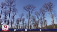 1.000 cây sồi dùng để tái thiết nhà thờ Đức Bà