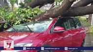 Cây xanh tại TP.HCM ngã đổ hàng loạt do mưa lớn