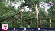 Giông lốc gây thiệt hại cây trồng, nhà cửa ở Bình Phước