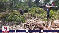 Mưa lớn, giông lốc tại Bình Phước gây thiệt hại nhiều tỷ đồng