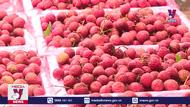 Toàn tỉnh Bắc Giang đã tiêu thụ được gần 50 nghìn tấn vải thiều