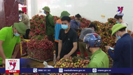 """Vải thiều Việt Nam chính thức """"chinh phục"""" thị trường EU"""