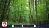 TEU đặt mục tiêu trồng 3 tỷ cây xanh