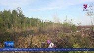 Lâm tặc tàn phá rừng phòng hộ ven biển Cà Mau
