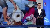 Giá tôm hùm ở Khánh Hòa tăng trở lại