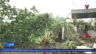 Bắc Giang phòng chống dịch bệnh, tái đàn trong chăn nuôi