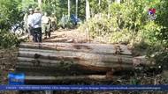 Gia Lai sẽ xử lý nghiêm vụ phá hoại rừng ở Kbang