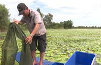 Báo động tình trạng tận diệt nguồn thủy sản mùa nước nổi