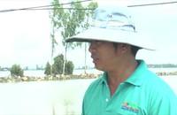 Lại vỡ đê bao, nhấn chìm gần 150 ha lúa chuẩn bị thu hoạch