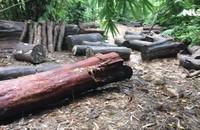 Rừng bị phá tan hoang, công an huyện lại cấm phóng viên tác nghiệp