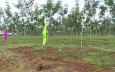 Bàn giao gần 2.600 ha đất sân bay Long Thành