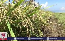 Ninh Thuận có huyện nông thôn mới đạt chuẩn đầu tiên