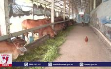 Hướng đi mới trong chăn nuôi tại Hà Nam