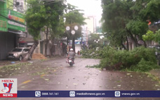 Bão số 9: Cây xanh ngã đổ hàng loạt tại Bình Định