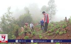 Điện Biên bảo vệ rừng gắn với phát triển kinh tế từ rừng