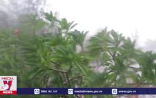 Bão số 12 gây mưa lớn và gió mạnh tại Phú Yên