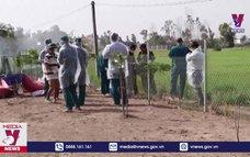 Long An dập dịch cúm H5N1 và dịch tả lợn Châu Phi