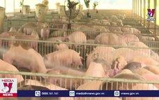 """Giá lợn hơi xuống thấp tại """"thủ phủ"""" chăn nuôi"""