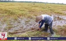 Triều cường và mưa lớn gây thiệt hại tại ở Hậu Giang