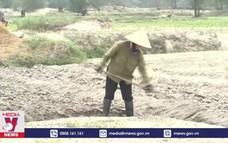 Khôi phục sản xuất nông nghiệp sau bão lũ