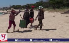 Ngư dân Ninh Thuận trúng đậm mùa ruốc biển