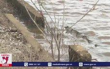 Hệ thống thủy lợi tại Quảng Bình thiệt hại nặng sau lũ