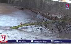 Bạc Liêu khẩn trương khắc phục sụt lún kè cửa biển