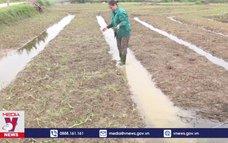 Nghệ An khôi phục sản xuất nông nghiệp sau bão lũ